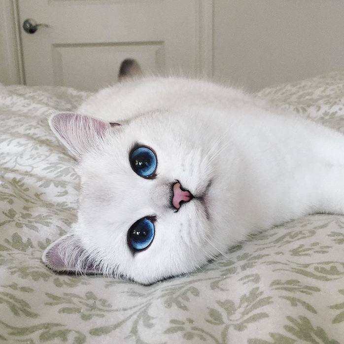 Cat has the most beautiful eyes ever