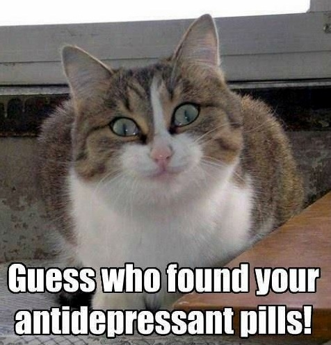 Cat tries happy pills