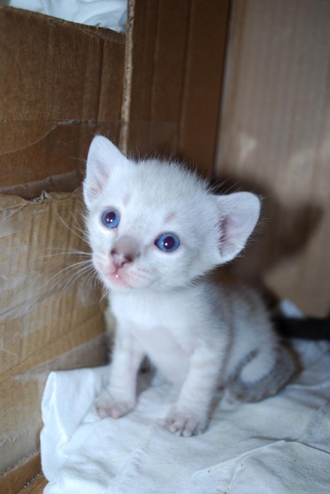 Caturday foster