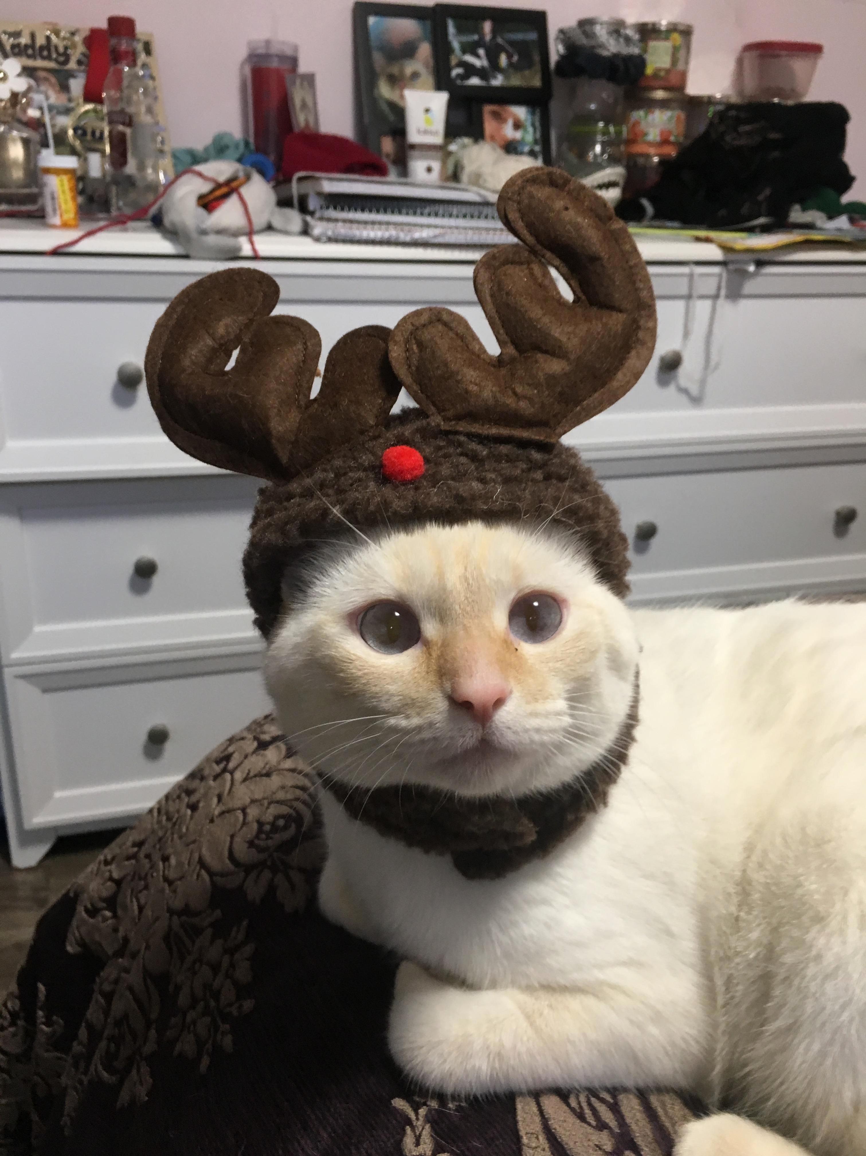 Chubs loves wearing his antler hat.