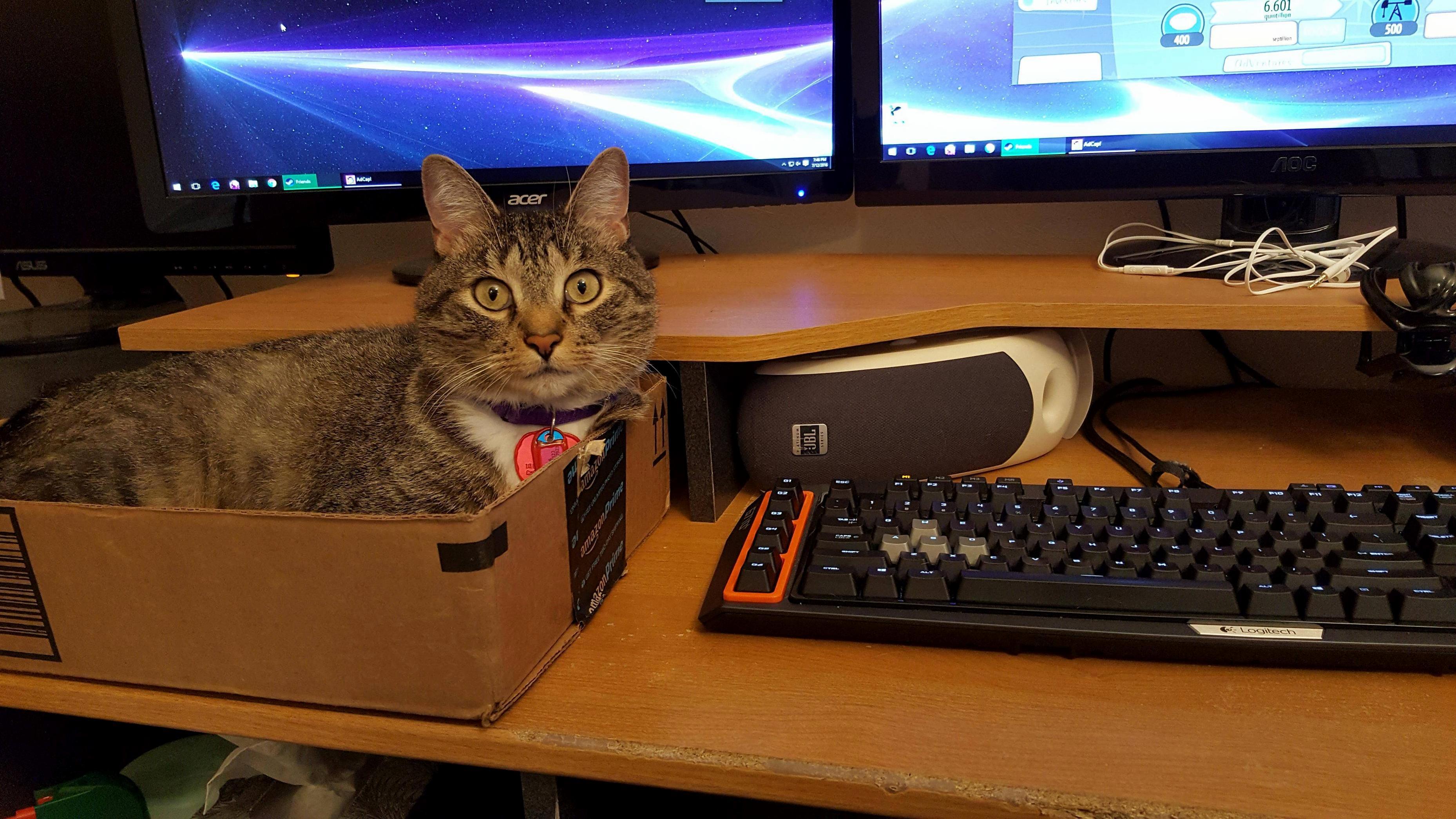 Desk cat