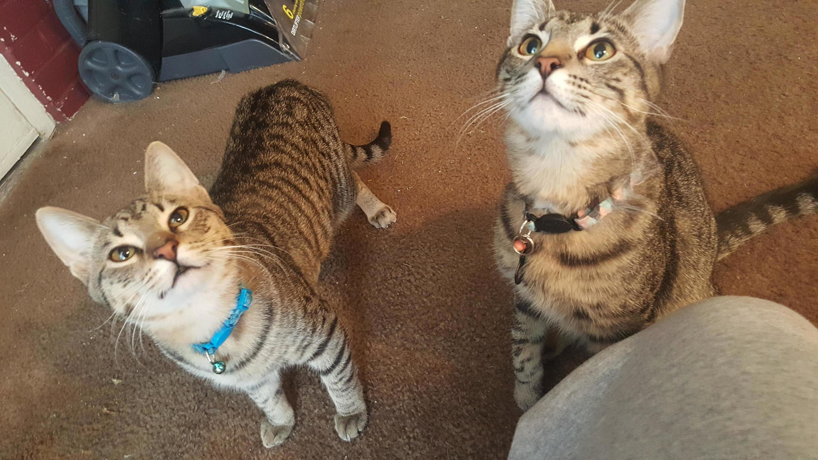 Doctor meepers and detective starskie brothers and former strays now fat healthy and happy