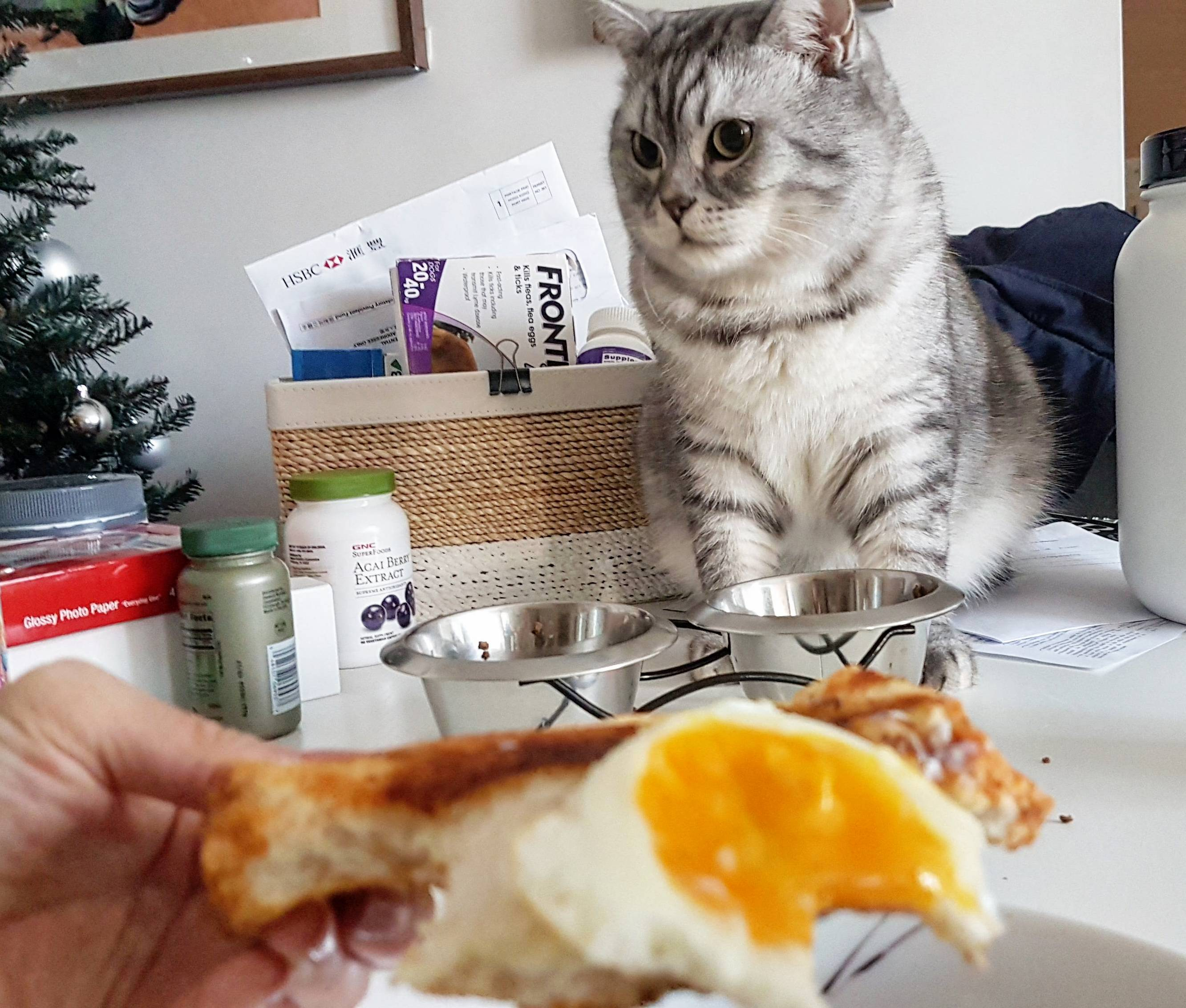 Eating breakfast with waffles