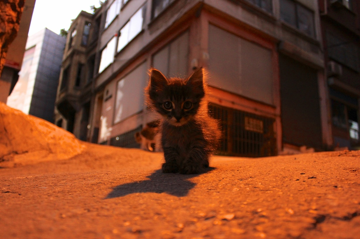 Found this little guy during a night walk in istanbul