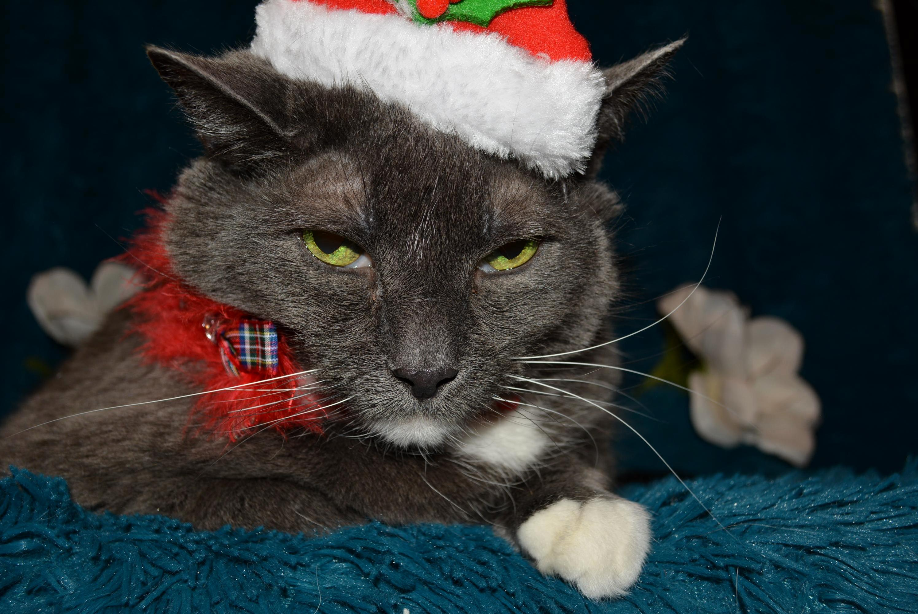 Geeeesh looks like somekitty is a grinch this year…