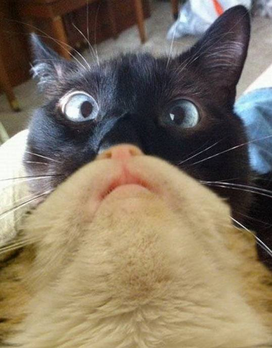 Googled best internet cats found this