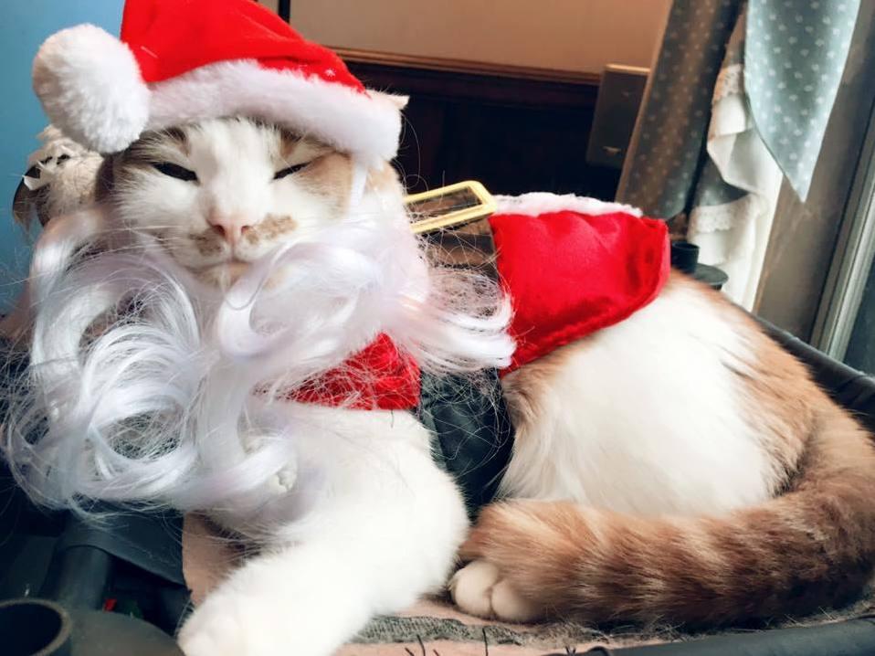 Happy holidays from carlos