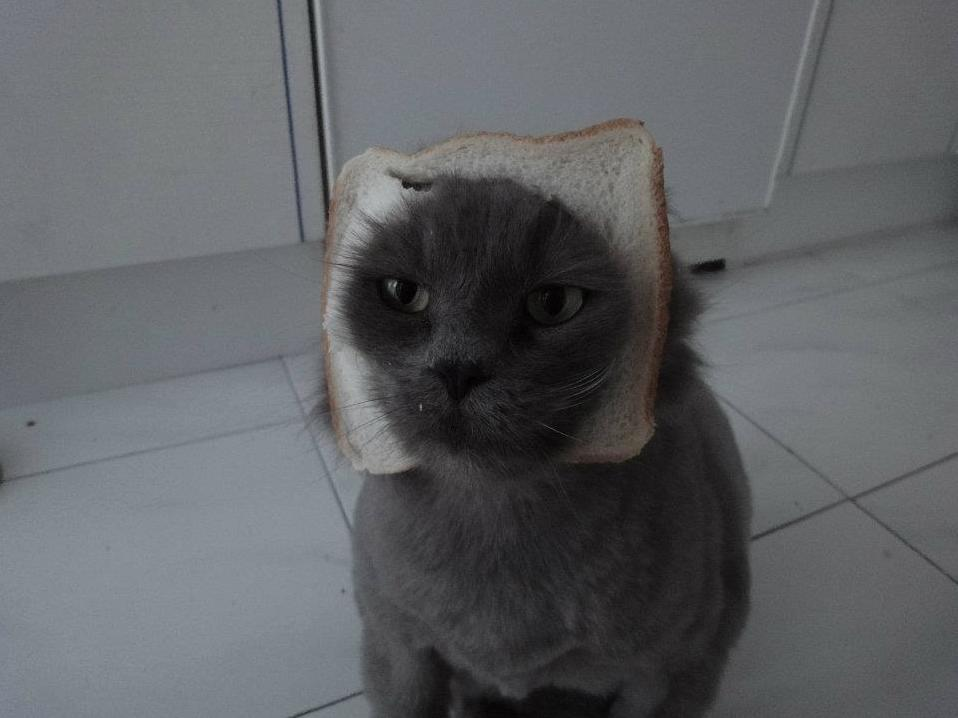 I was making a sandwich