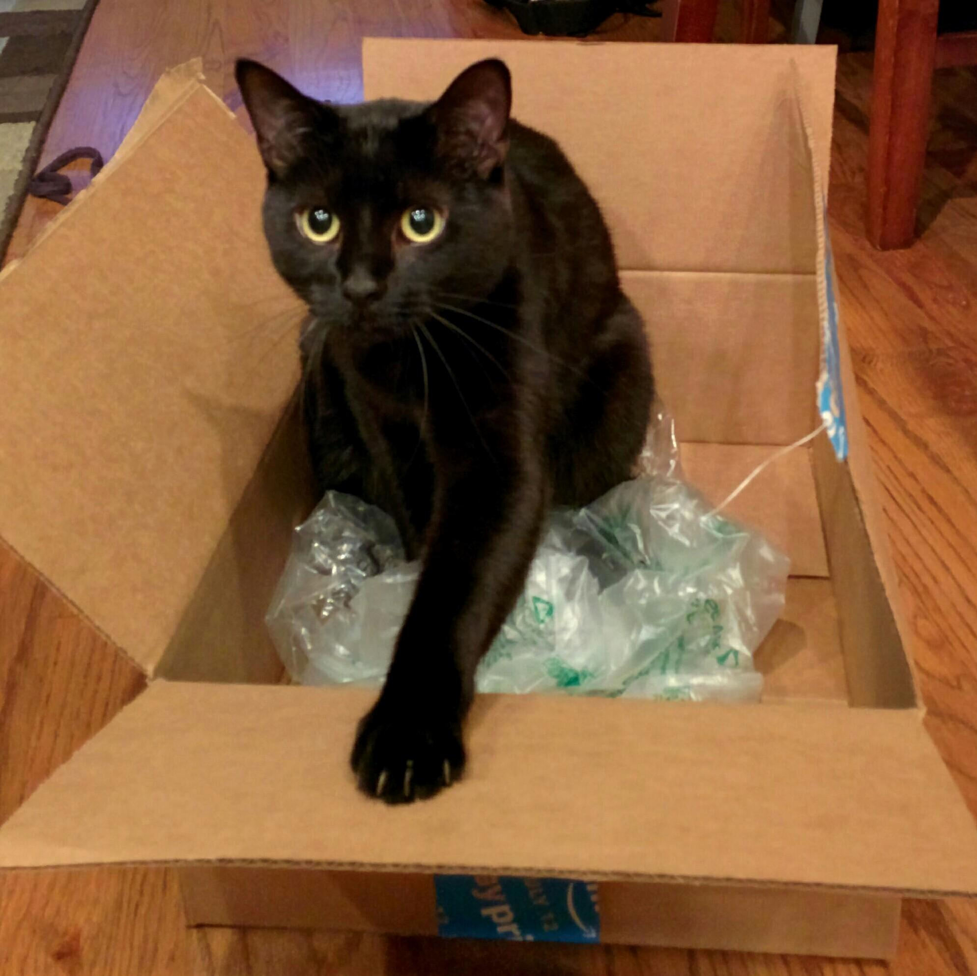 Im pretty sure that amazon prime day was orchestrated by cats for cats. its not about your great deal its about the boxes that arrive at your home.