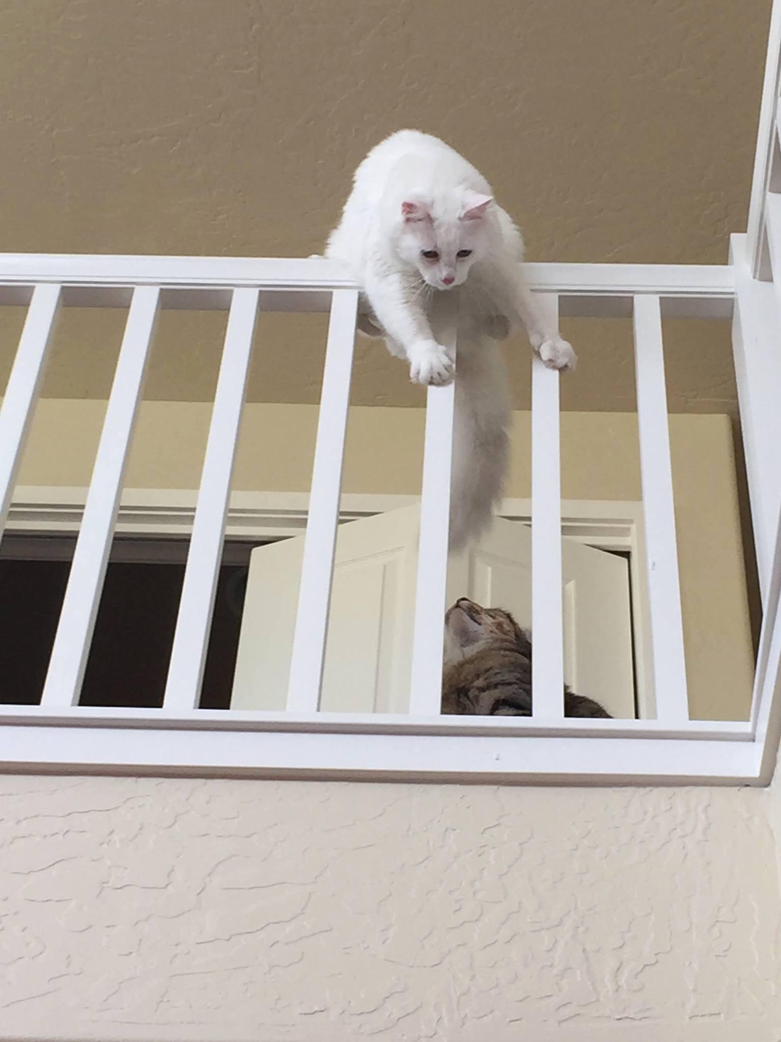 Jump i dare you.