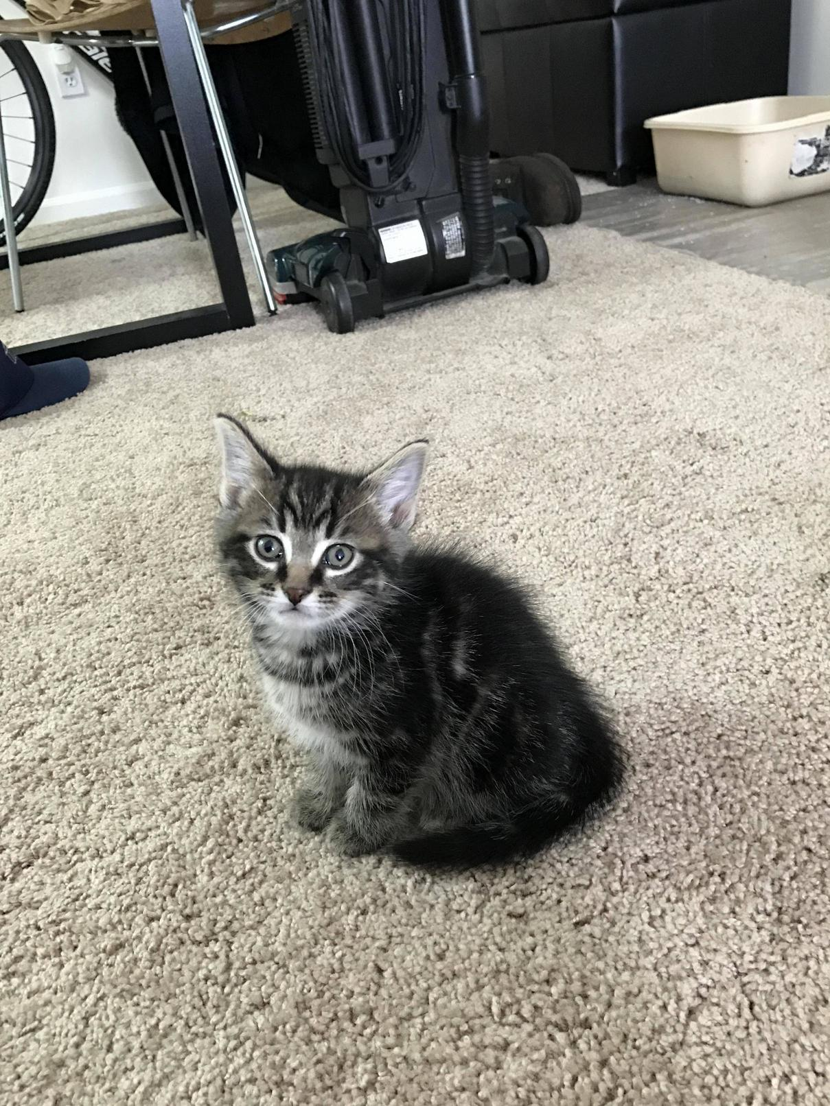 Just got my first cat