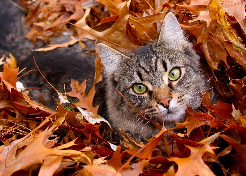 Kitty in leaves
