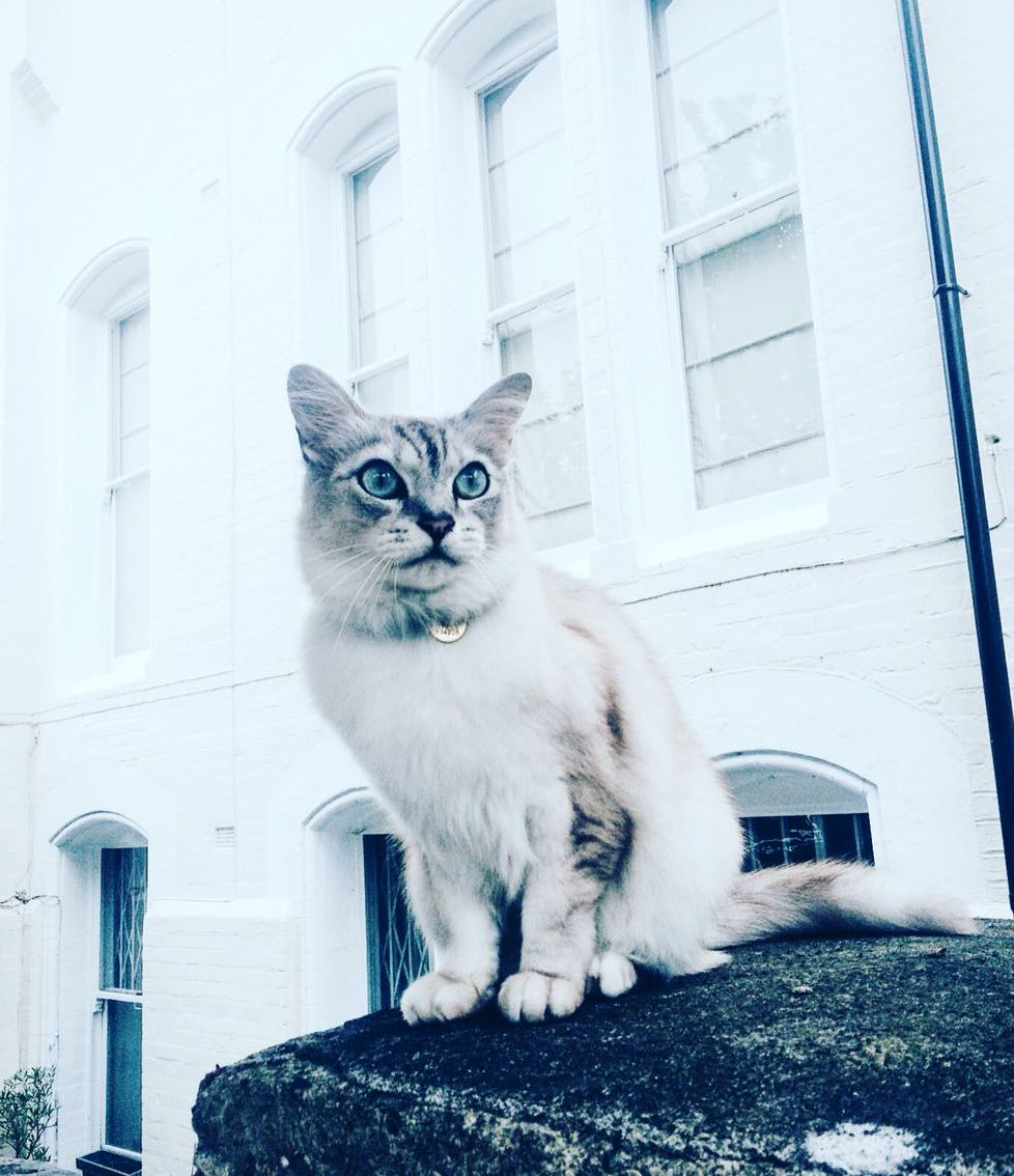 London cats never turn down a chance to model