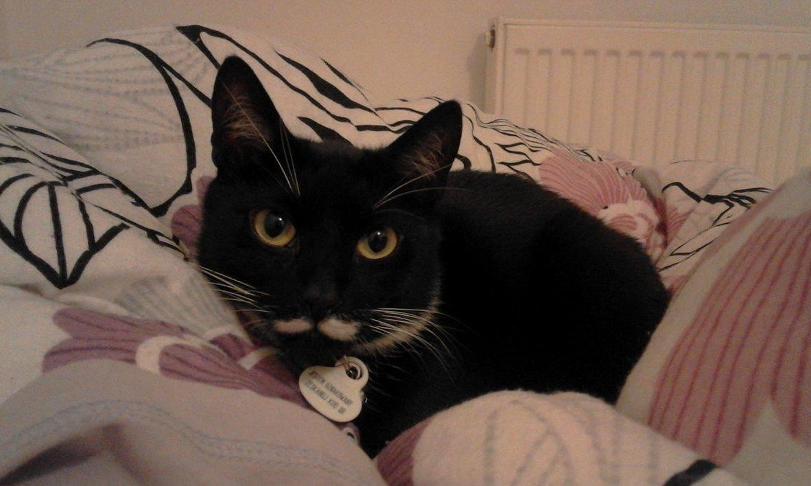 Marsza ek is getting comfy before bedtime