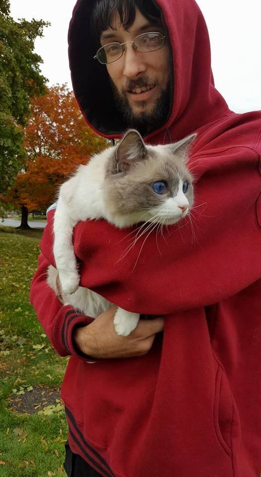 Meet ivy a blue bicolor ragdoll