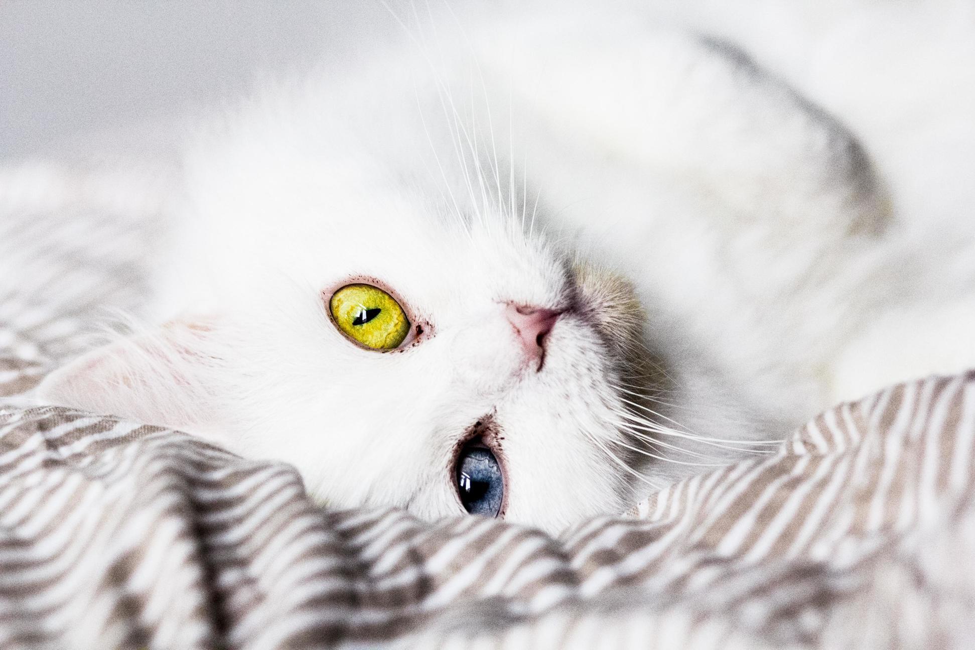 Meet marie she has heterochromia