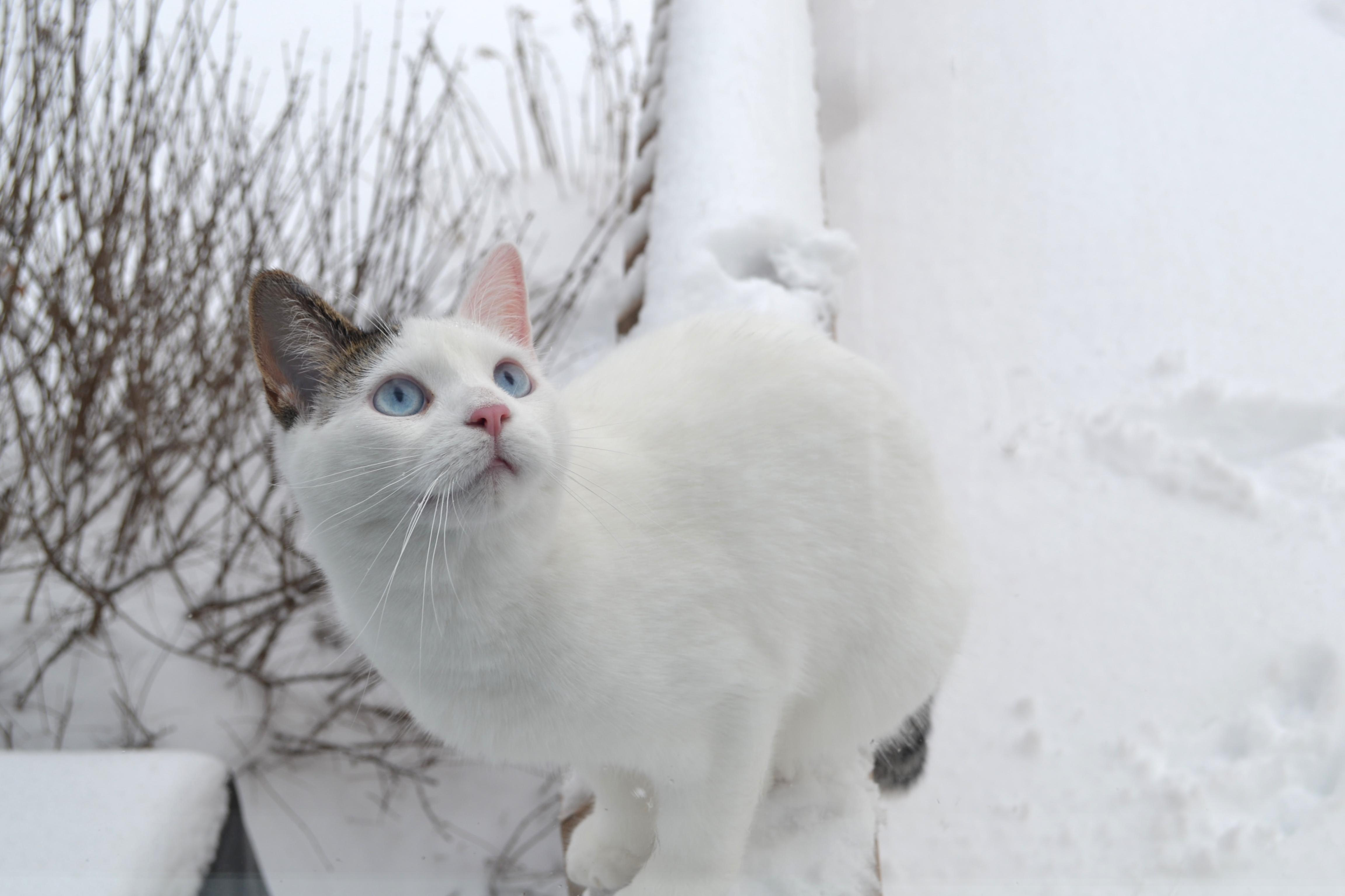 Meet snowball think she loves the snow