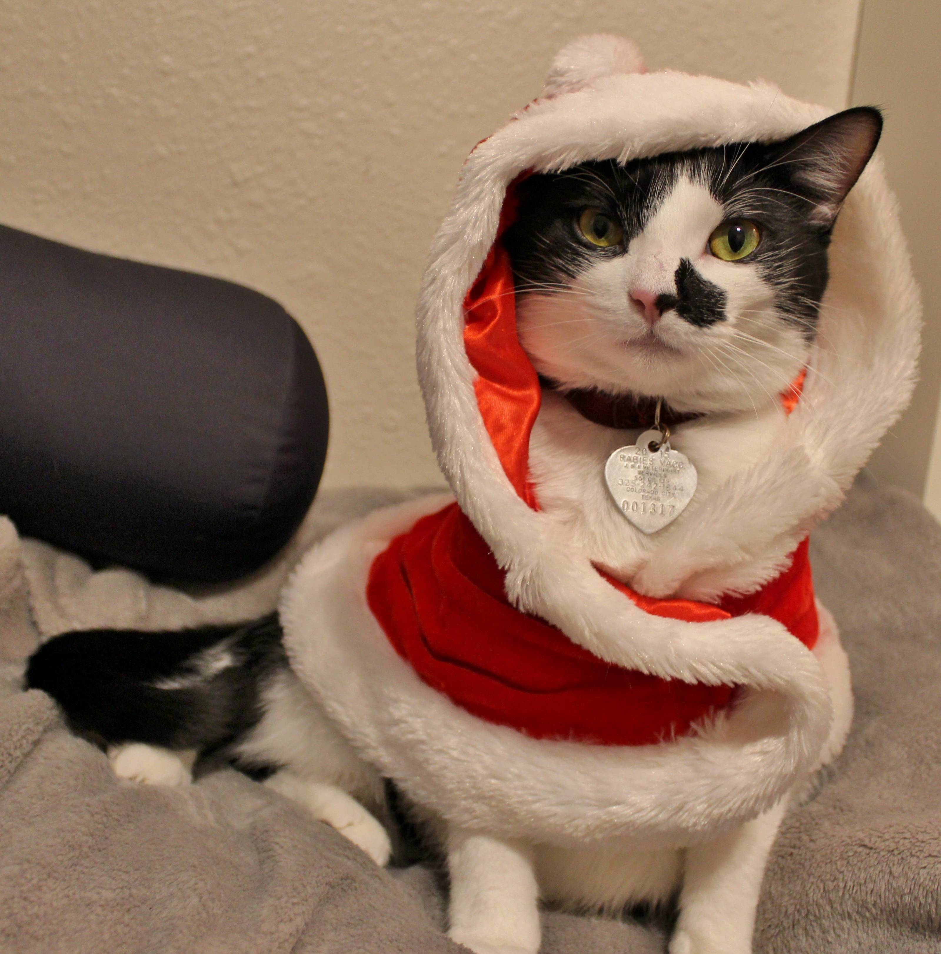 Merry christmas eve from tuxie