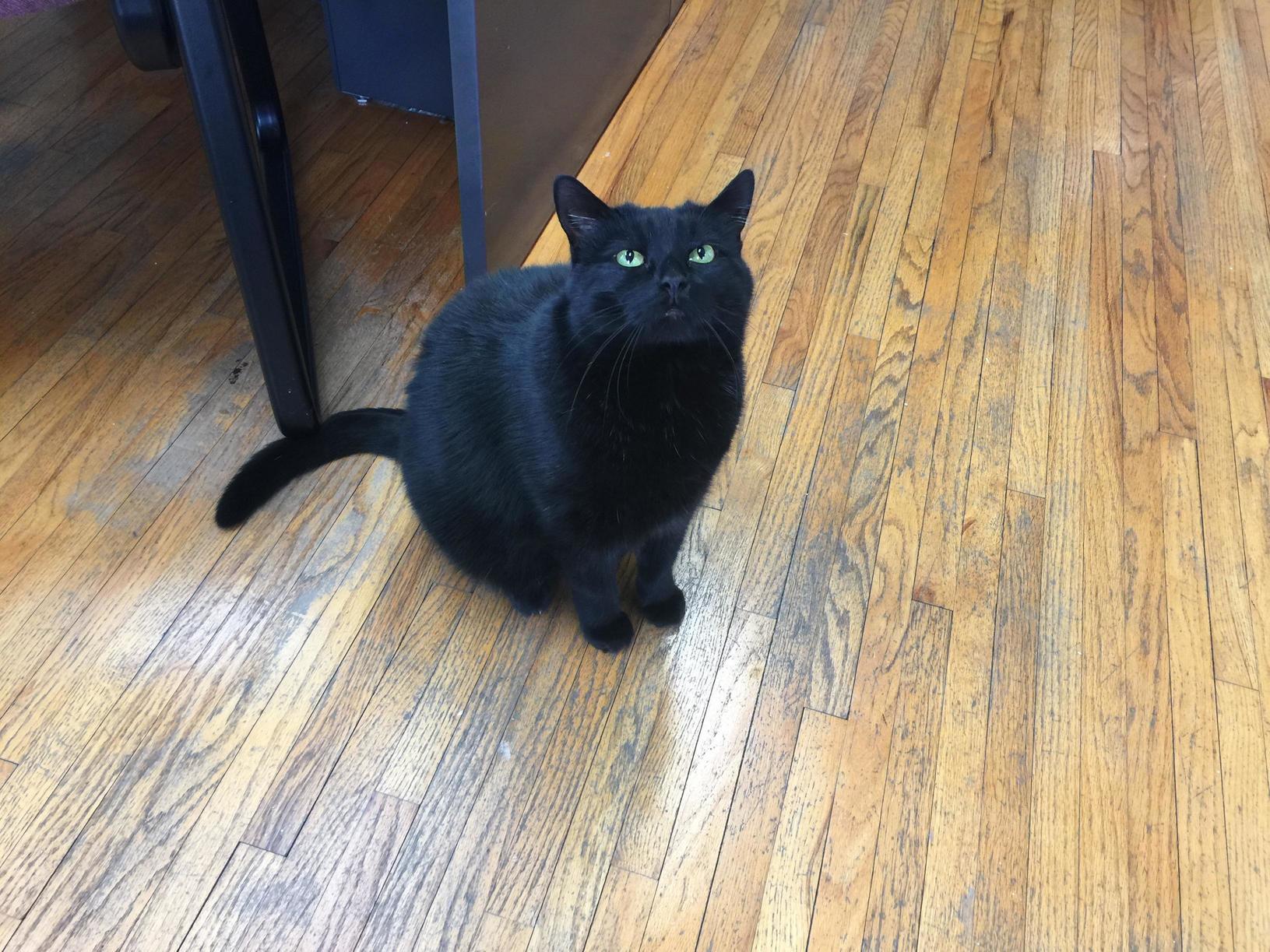 Met this handsome gentleman at an insurance office last week