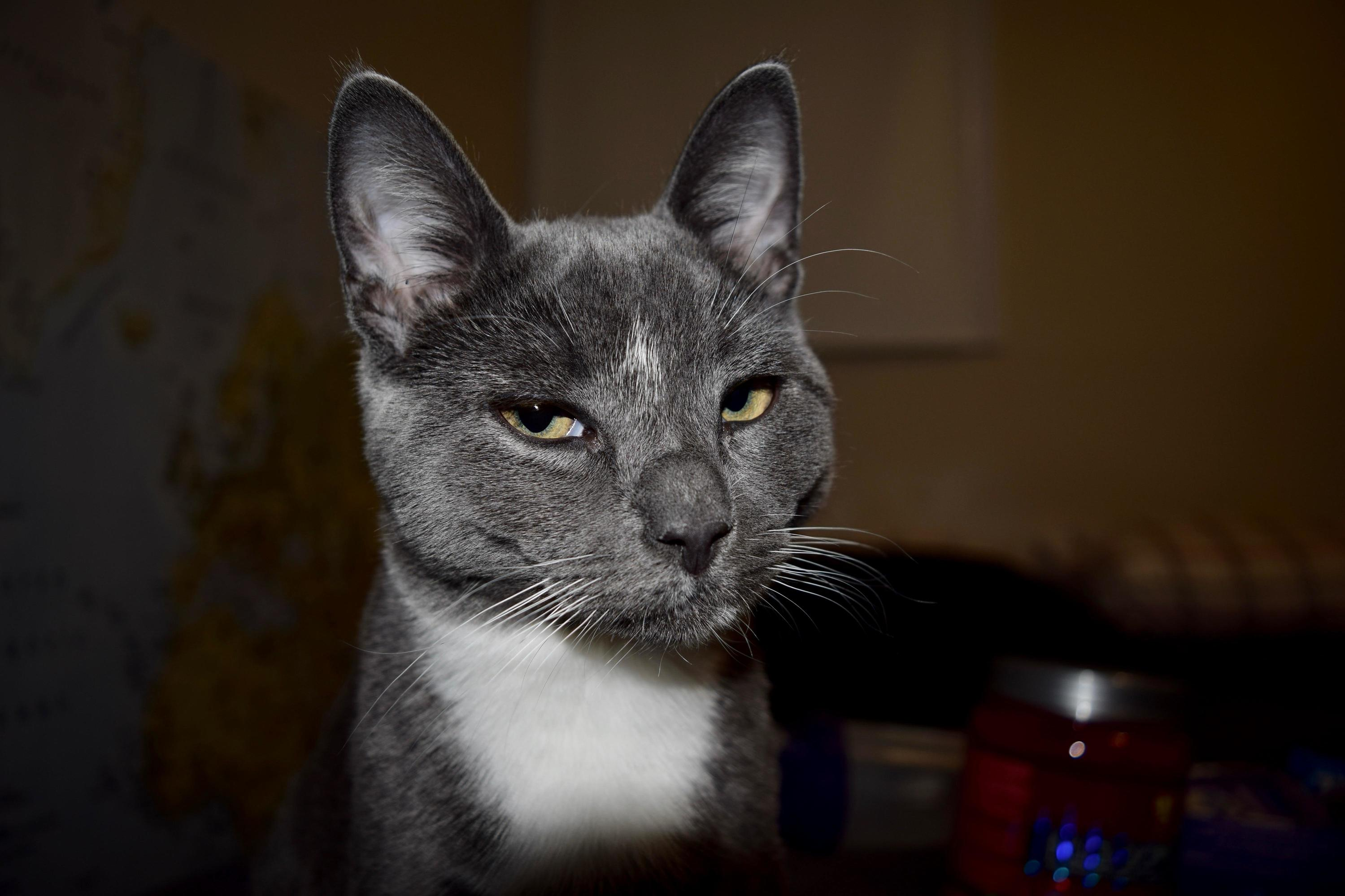 Mr. sprinkles is not impressed with my new camera