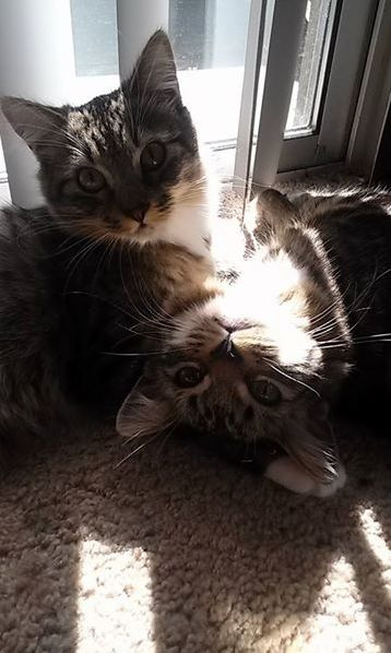 Muffy and snuggles sunbathing together.