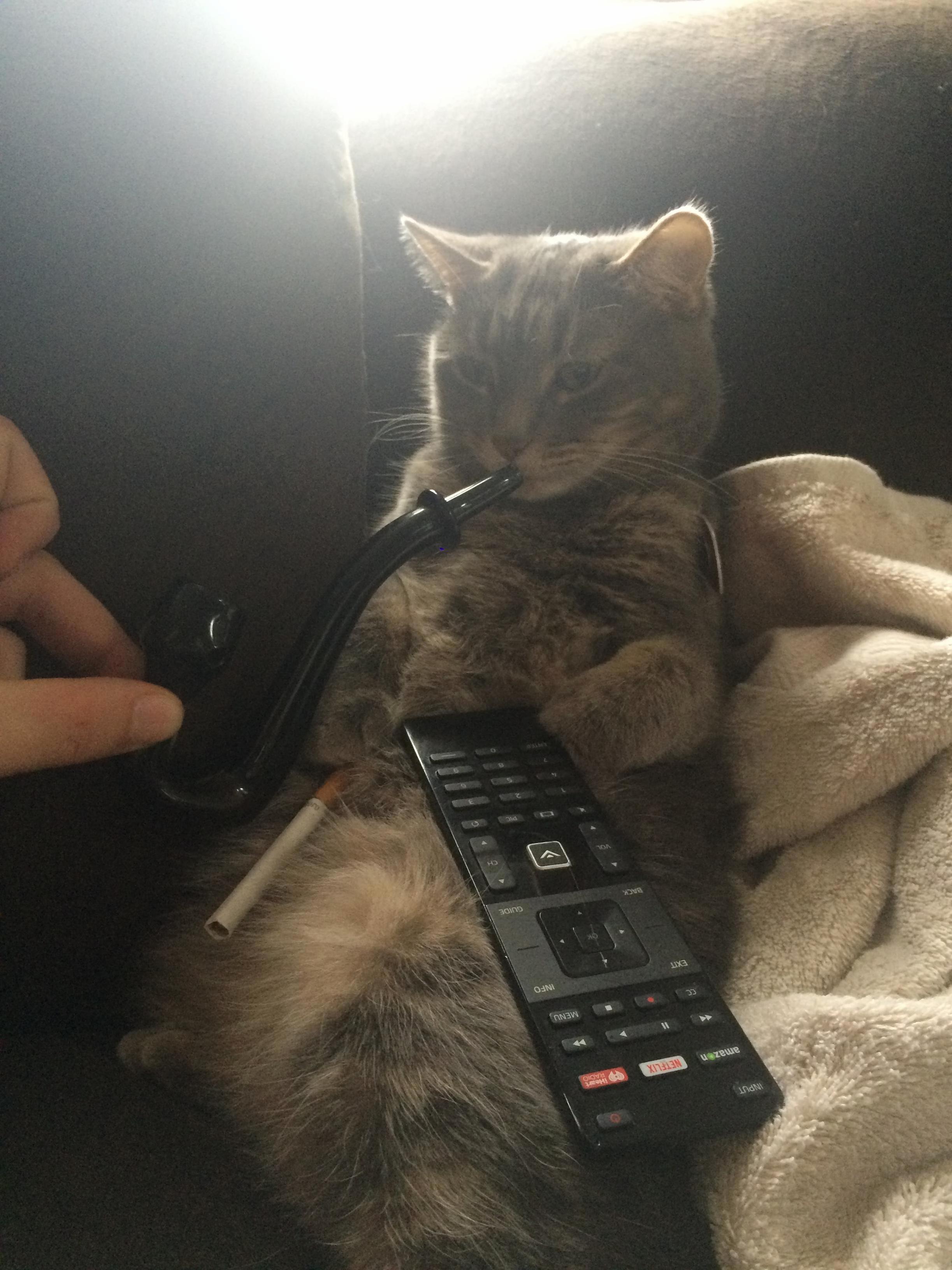 My best friend is babysitting my cat…