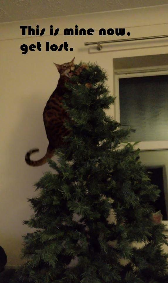 My cat and his christmas tree