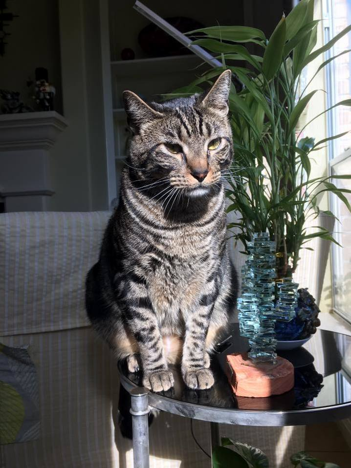My cat jasper hes a handsome fella