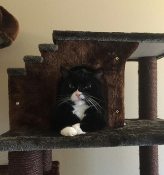 My cat looking real tough atop his cat mansion