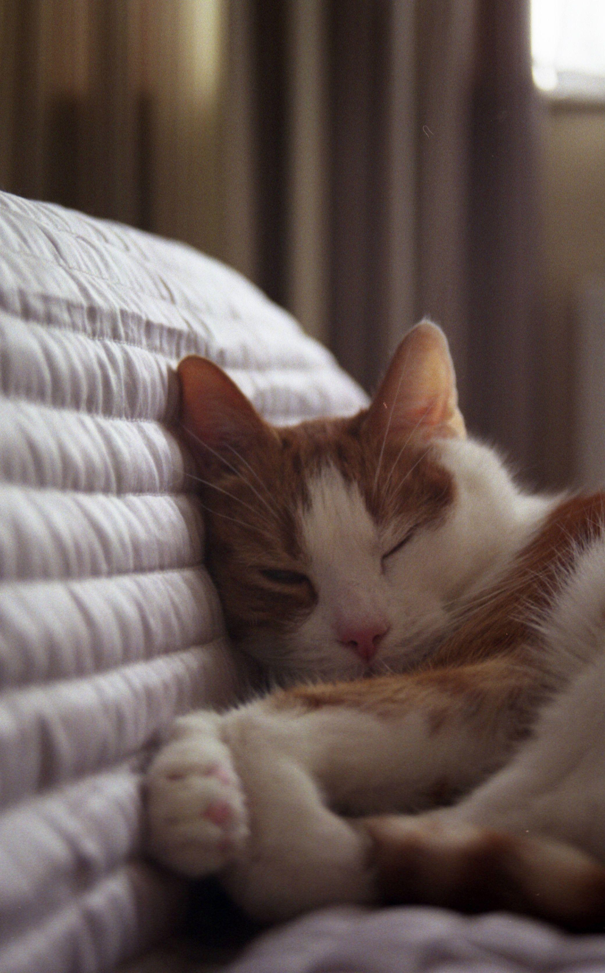 My cat waking up