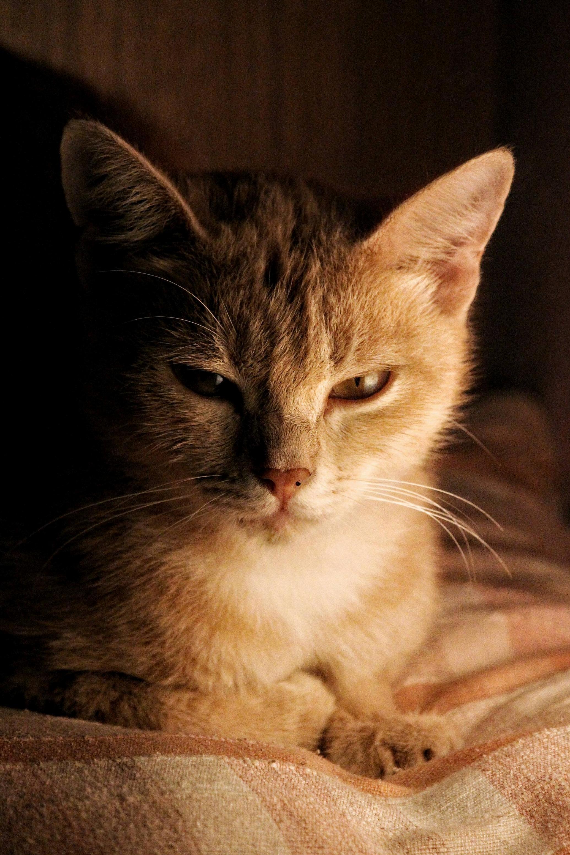 My cousins majestic cat queen eevee