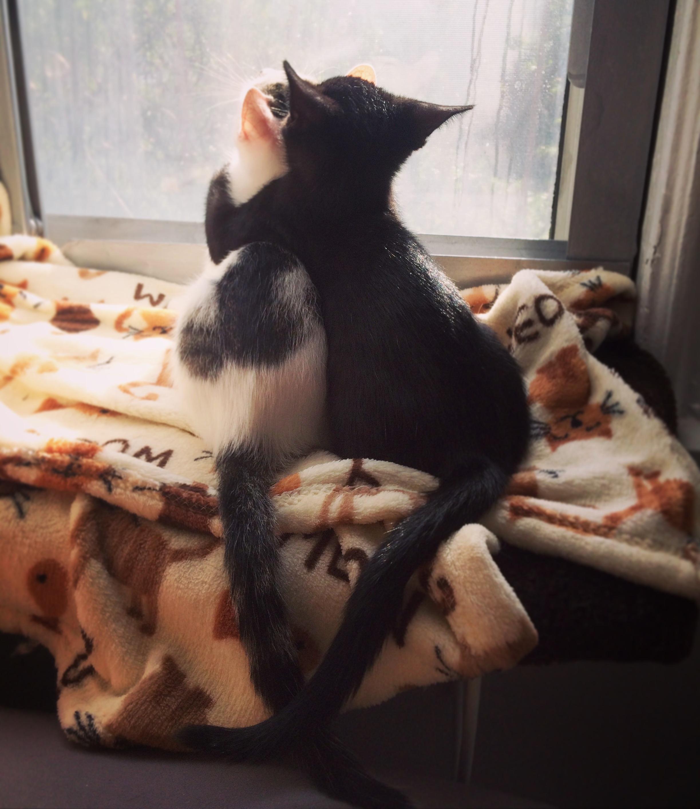My foster kittens being best buddies