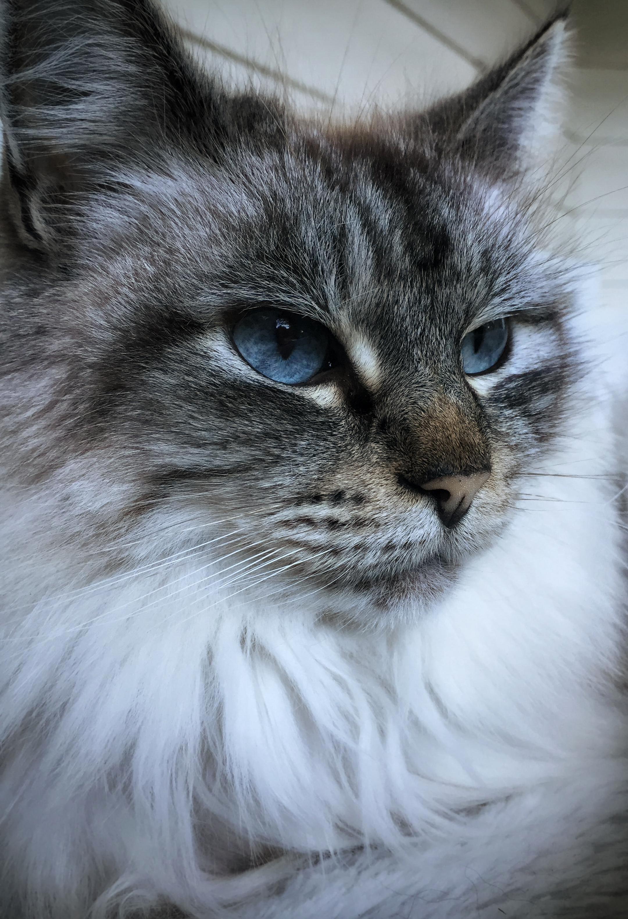 My grandmas cat lily is really photogenic.
