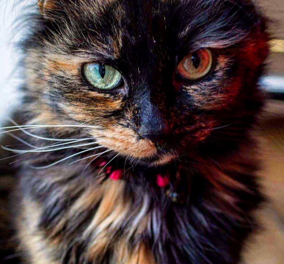 My mums partner took this lovely photo of my beautiful girl who recently turned 9.