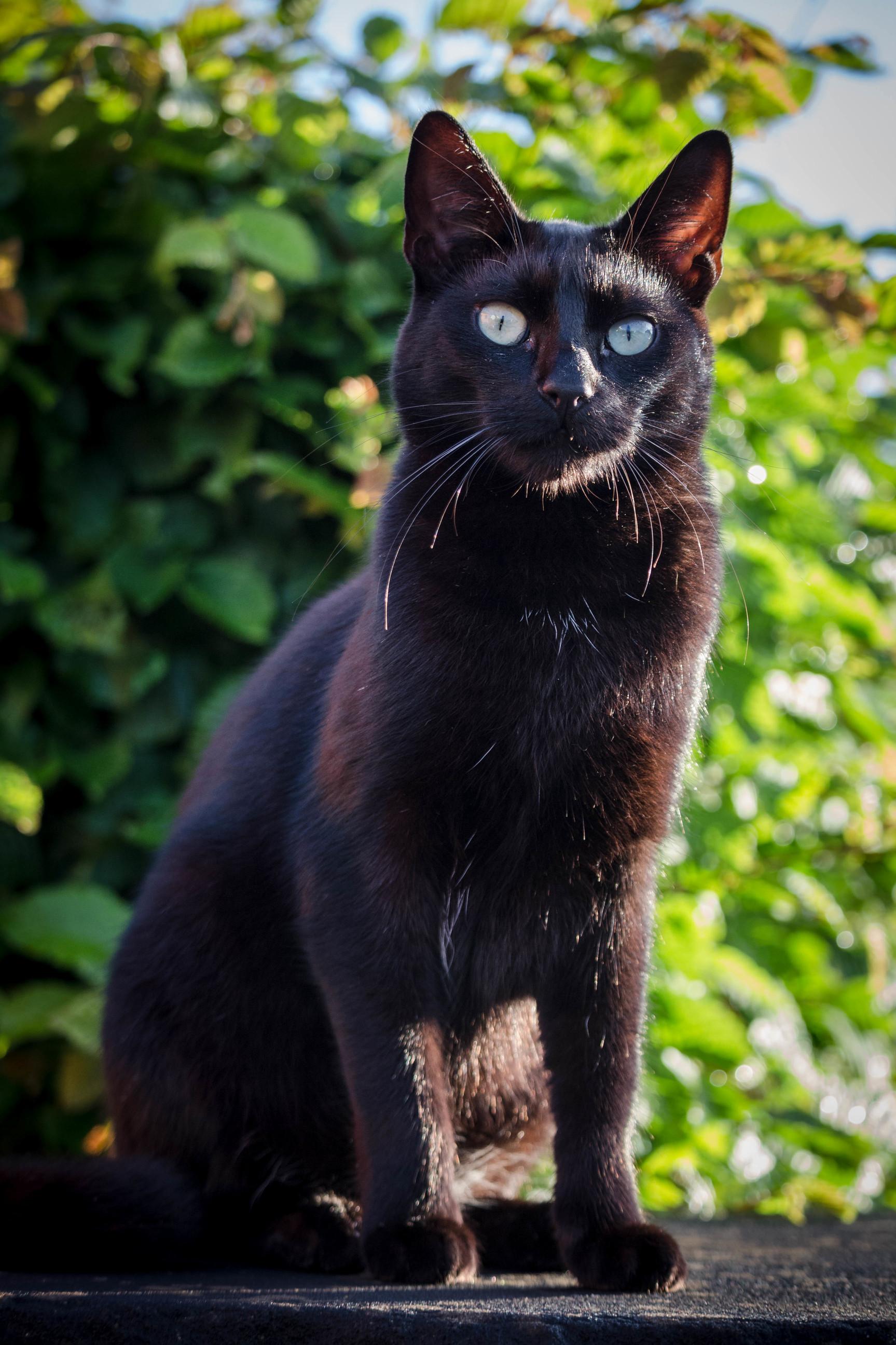 Our half blind 2 jear old cat jack.