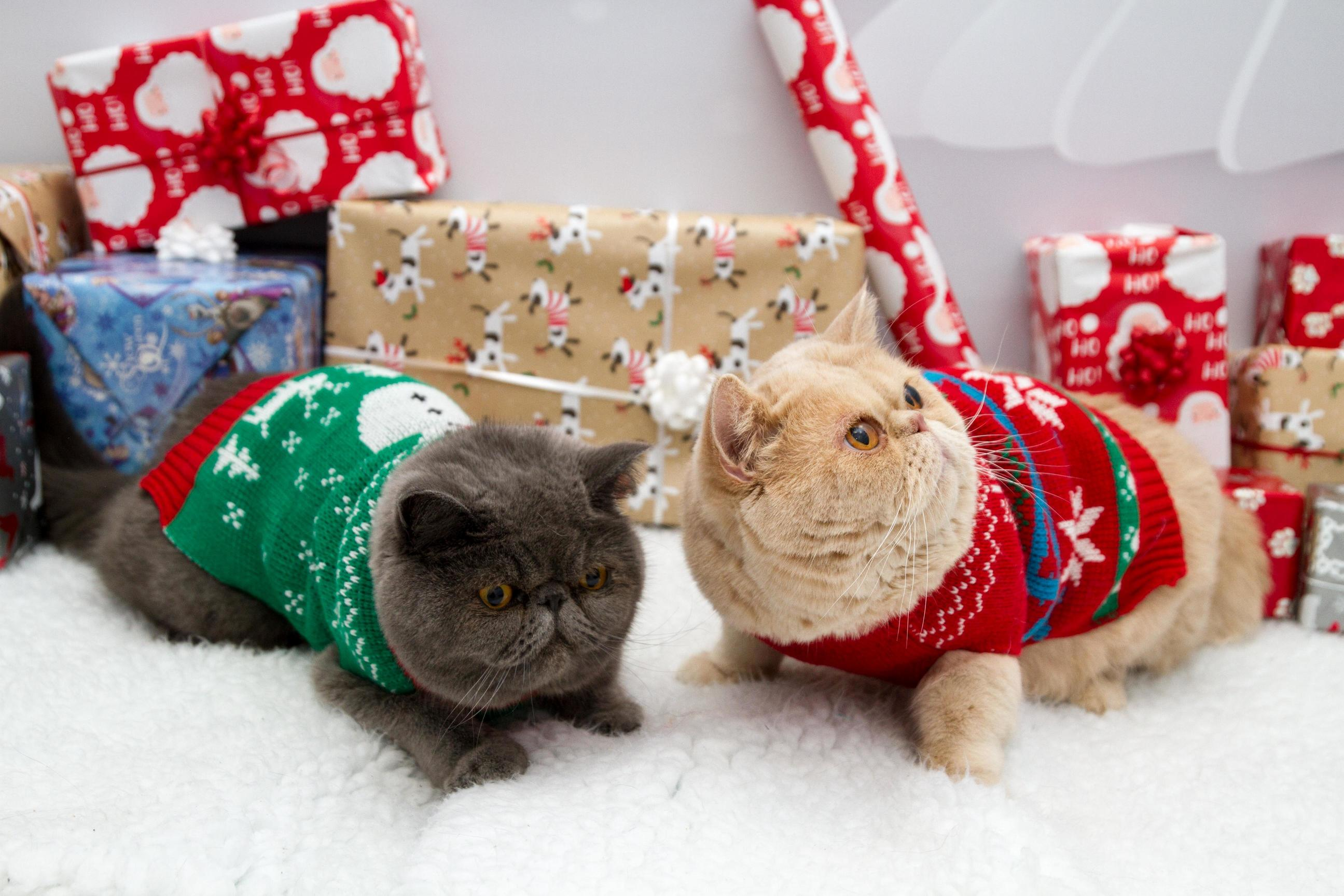 Our local vets held a christmas themed pet photoshoot