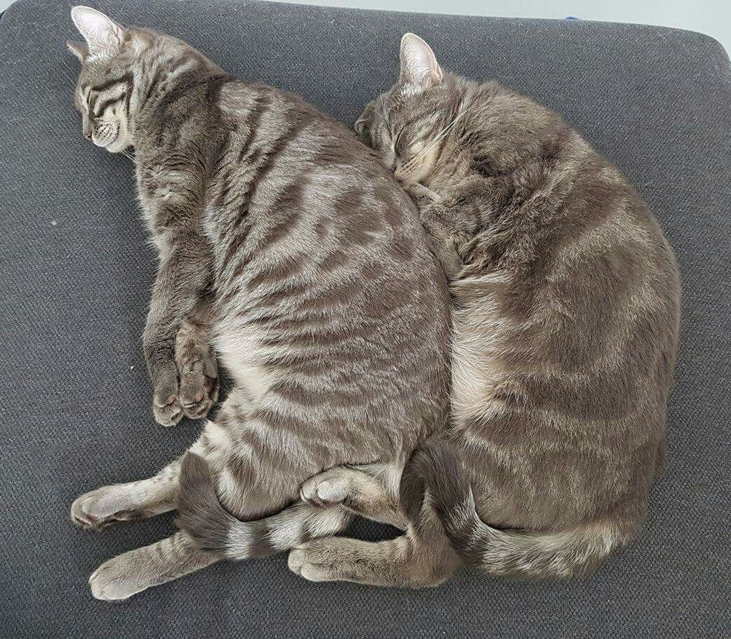 Post playtime spooning