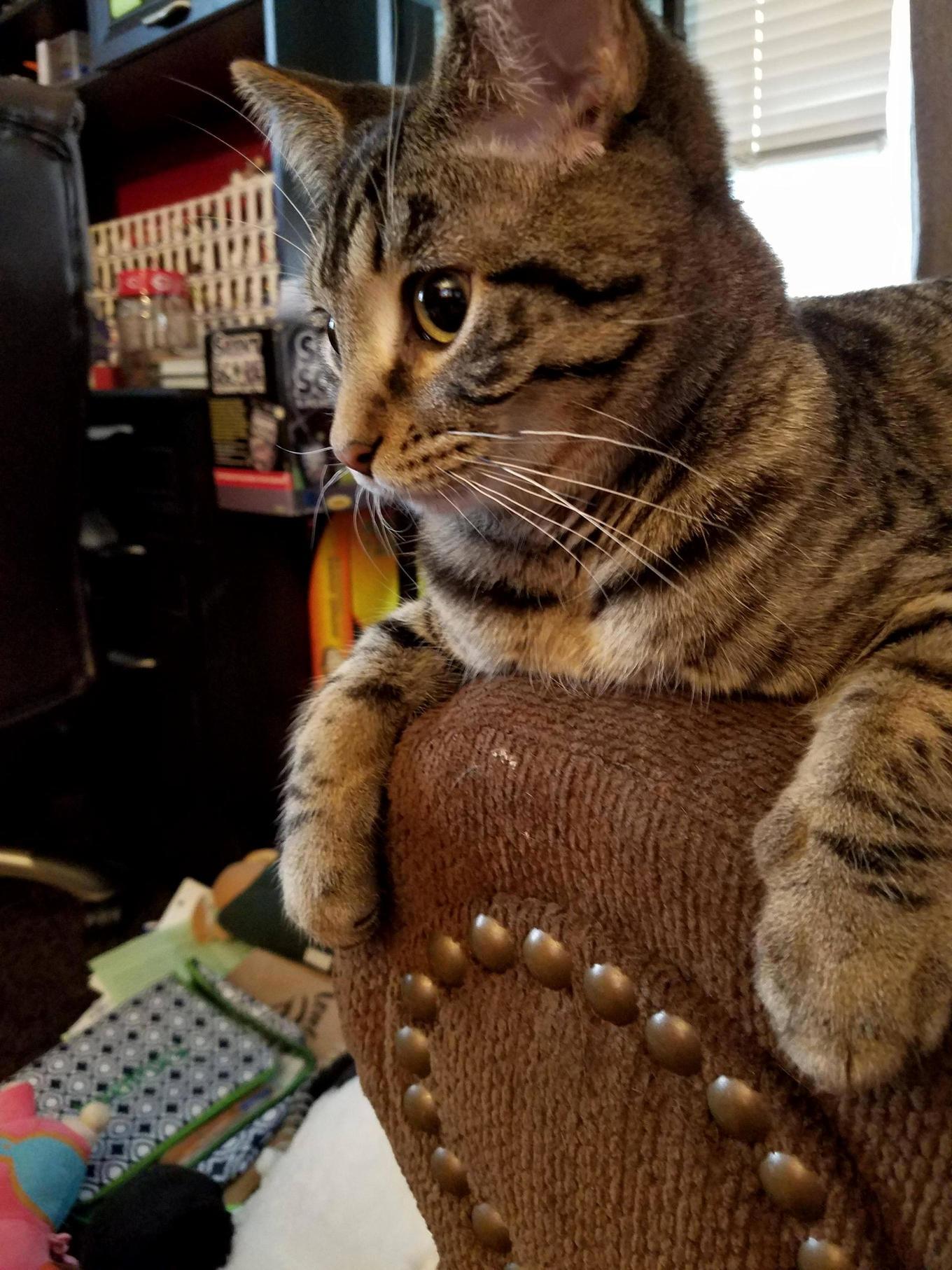 Prince lebowski surveys his kingdom. he is pleased.
