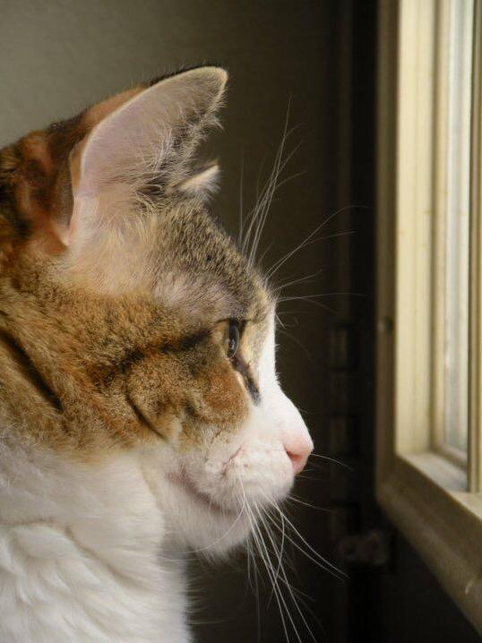 Profile of a cat