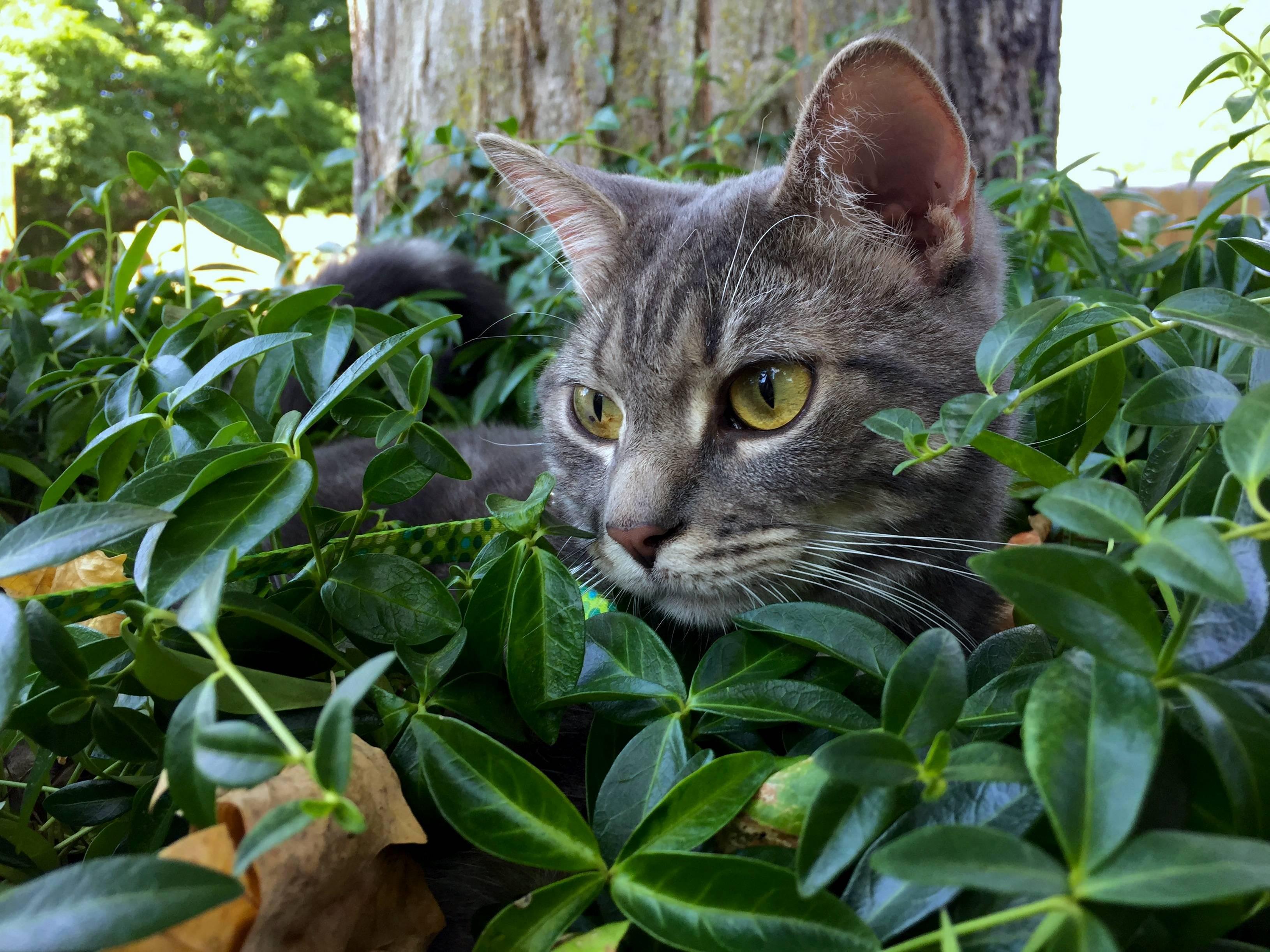 Rubin loves going outside