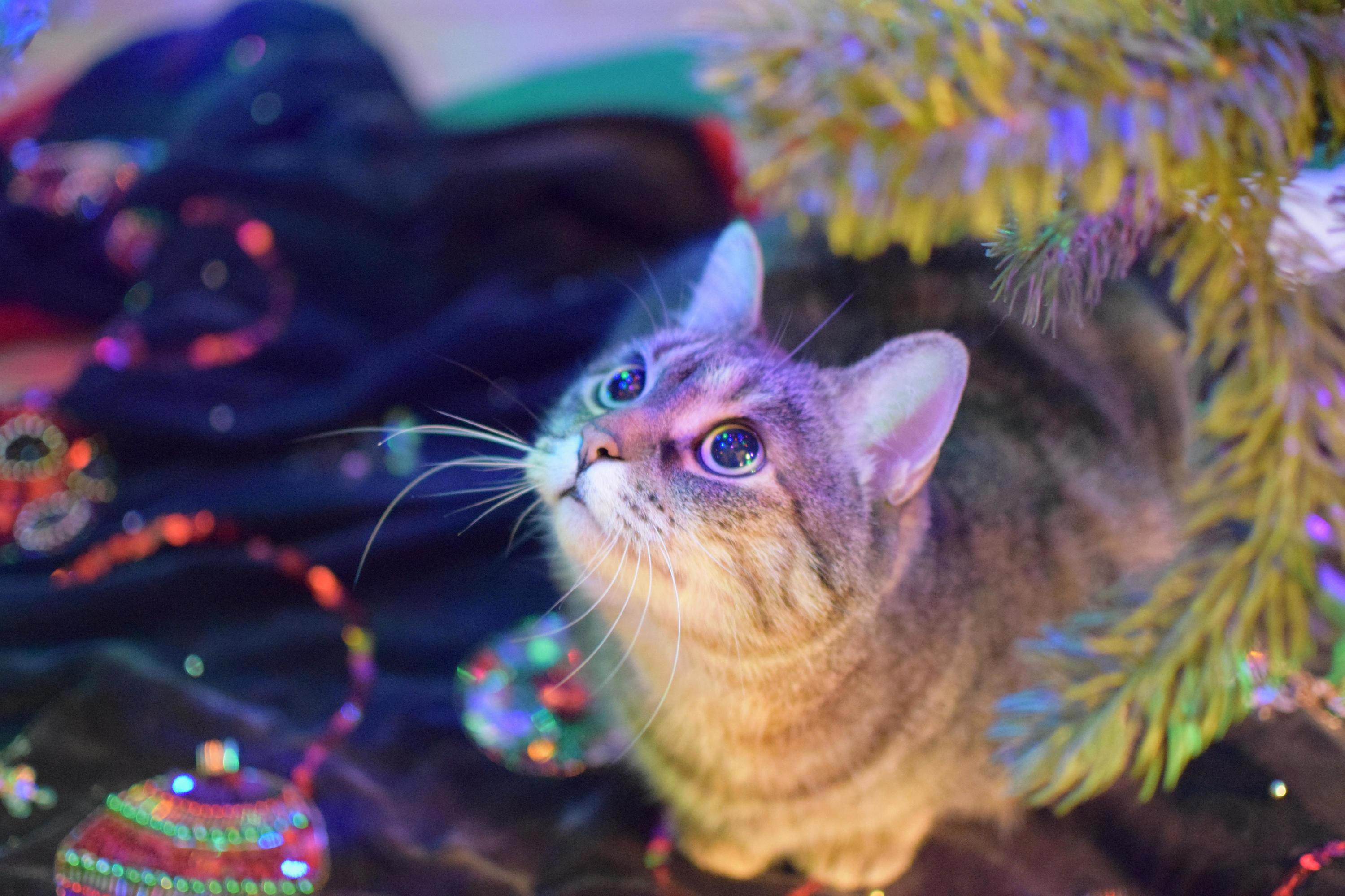 She loves christmas trees