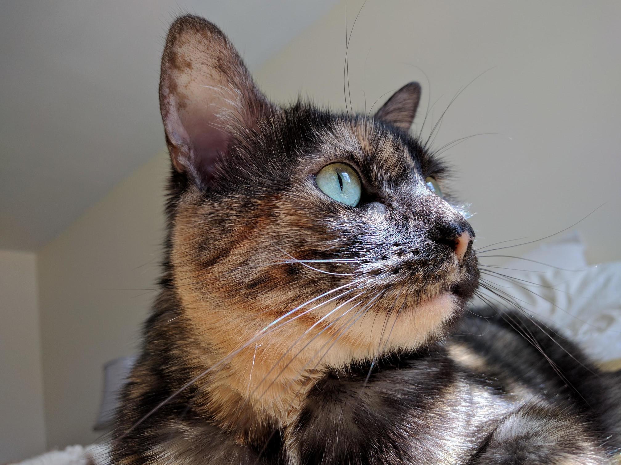 She sees a bird