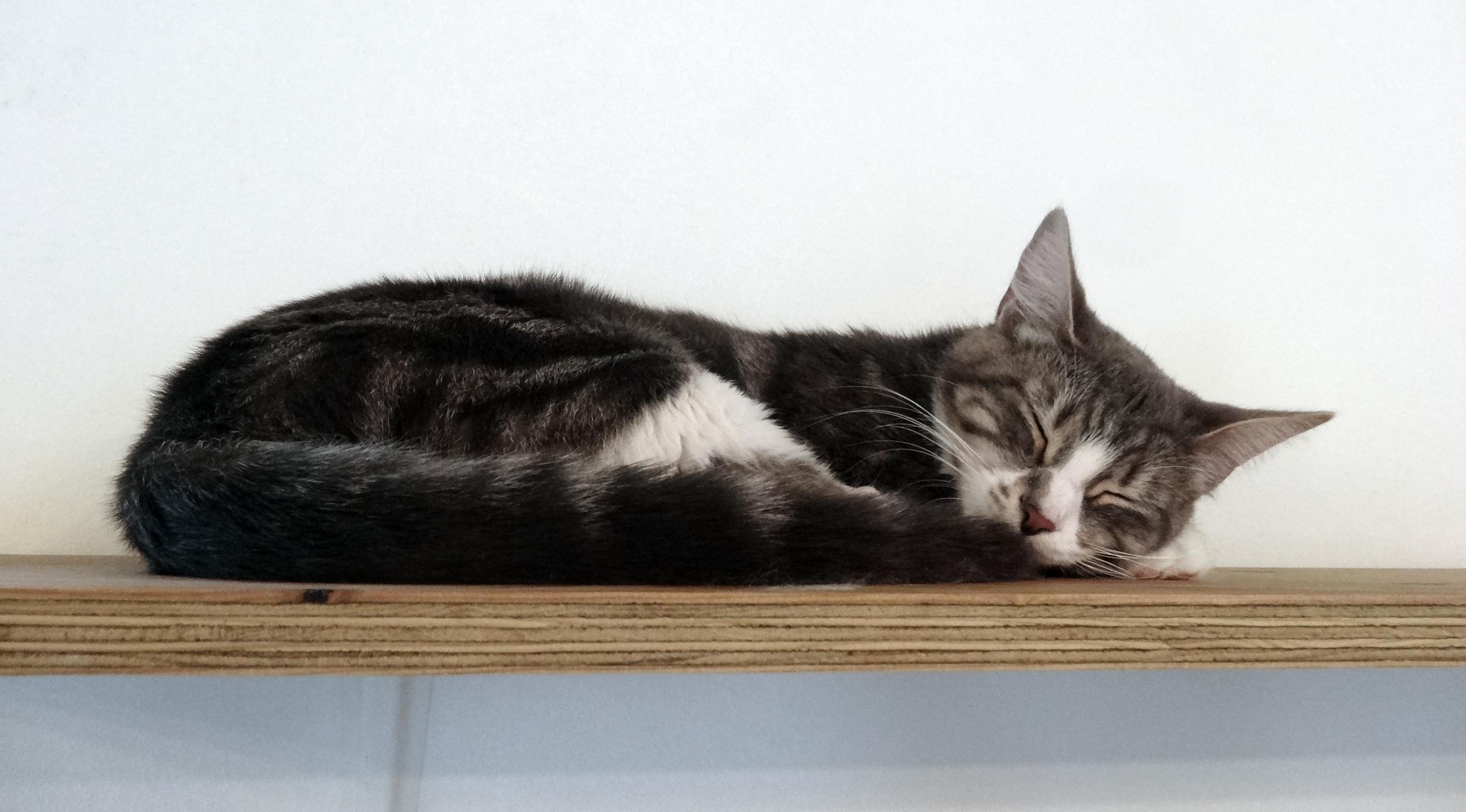 Sleepy saturday