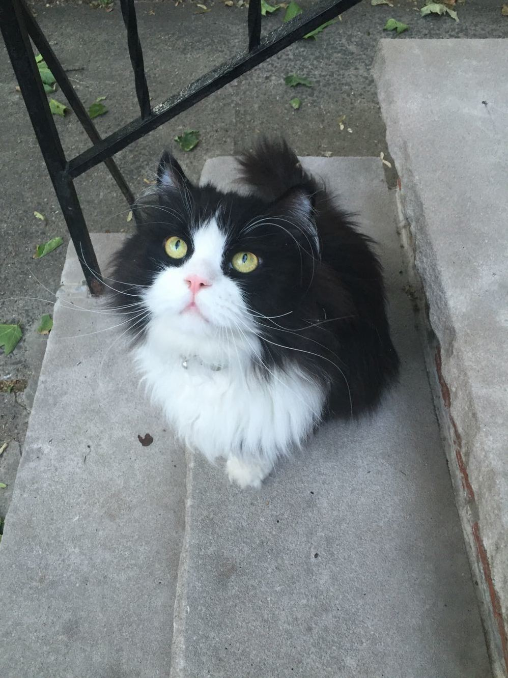 So stoop cat minkus left his stoop this evening and is currently lounging on my porch