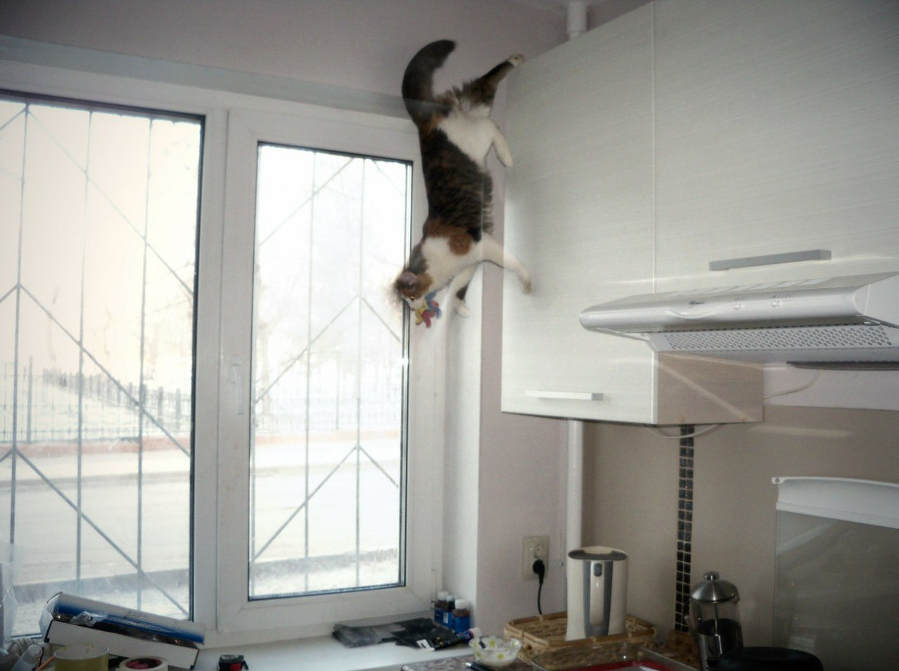Sonya the gravity denying cat