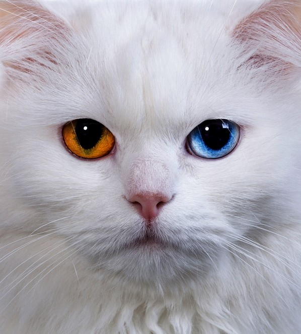 Spectrum eyes