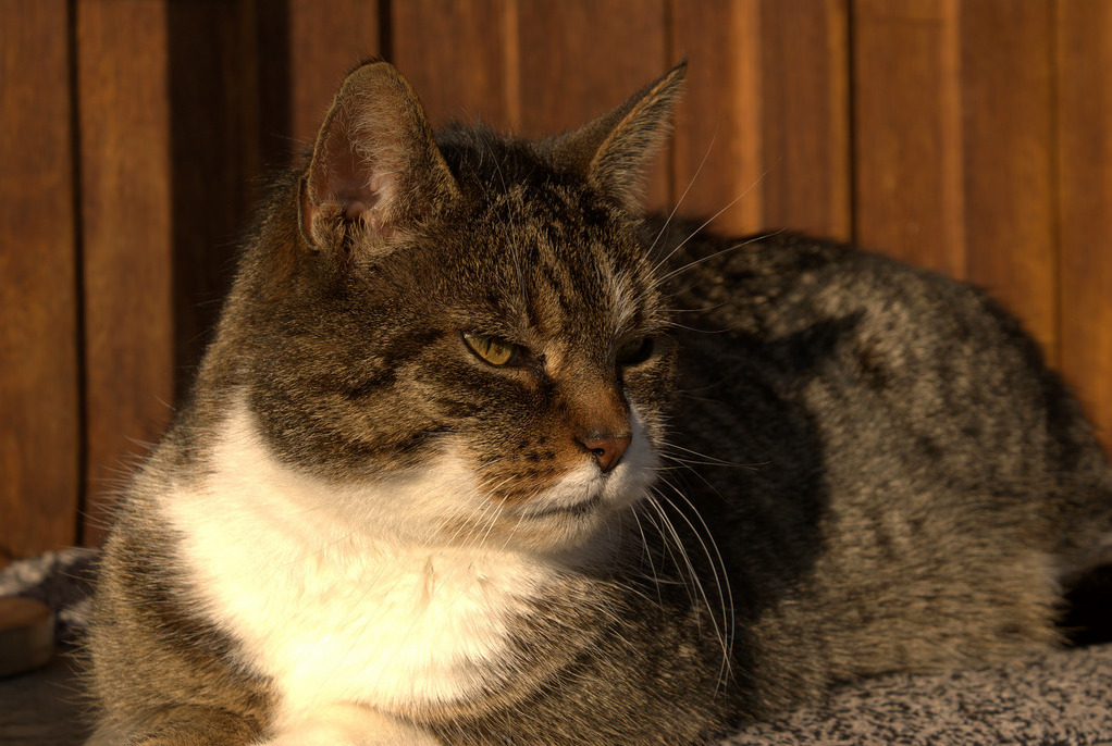 Sultan is taking a rest in the evening sun. good times for all the mice out there…