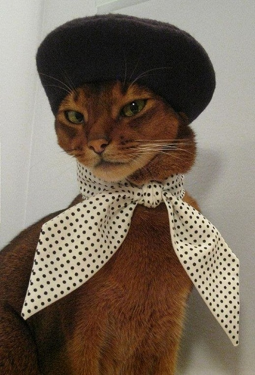 This cat is wearing a hat