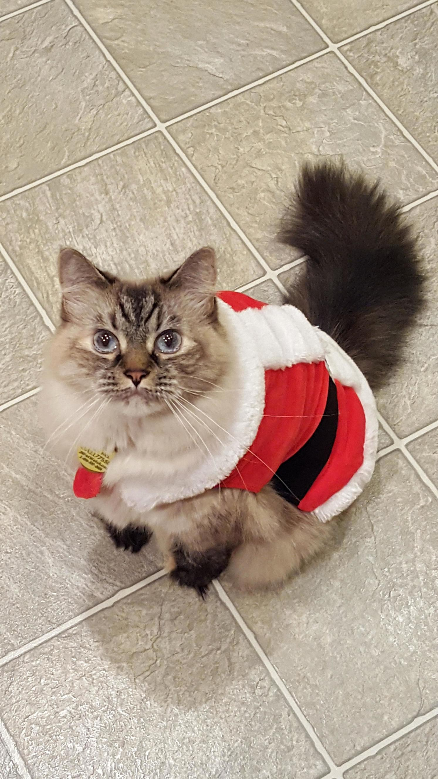 This is dr hawking she looks cute af in her santa outfit