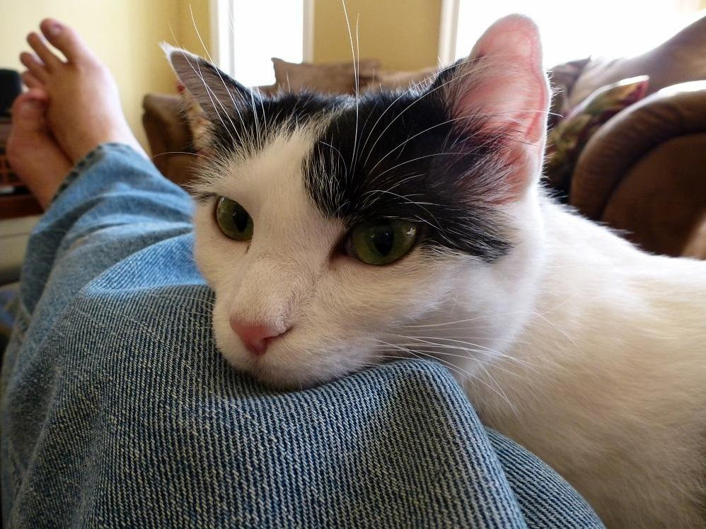 This is shira an abused feral rescued from afghanistan